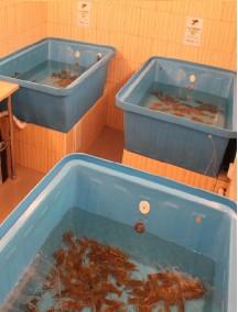 Пластиковый бассейн 2,0*1,0*0,5м -6 мм